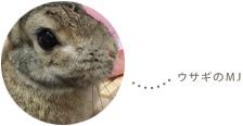 ウサギのMJ